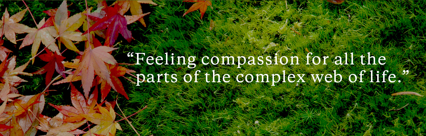 compassion and meaning